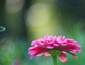 flower, emerging