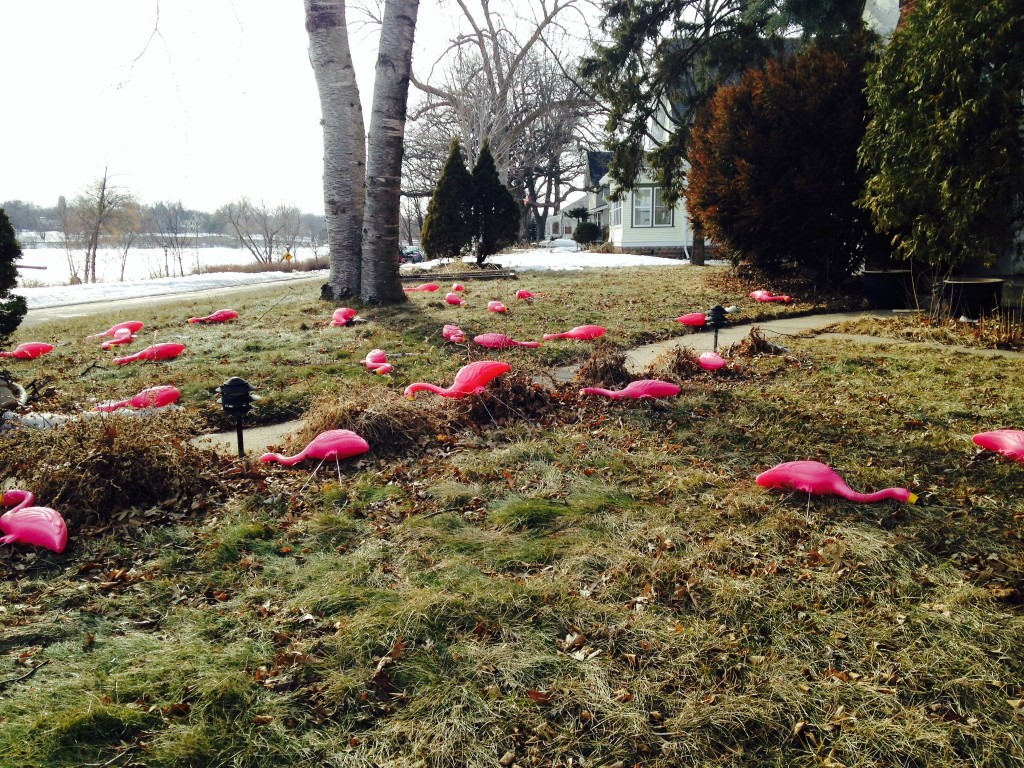 Pink flamingos in spring wind